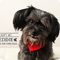 Adopt A Pet :: Eddie-pending adoption - Omaha, NE