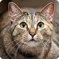 Adopt A Pet :: Catnippa - Dallas, TX