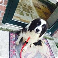 Adopt A Pet :: Sam - Midwest (WI, IL, MN), WI