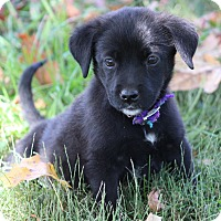 Adopt A Pet :: Little Pink-ADOPTED - Glastonbury, CT
