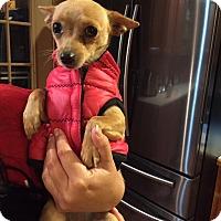 Adopt A Pet :: Piper - Ashville, OH