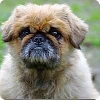 Adopt A Pet :: Bear - Longview, WA