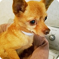 Adopt A Pet :: Charlie #27 - Durham, NC