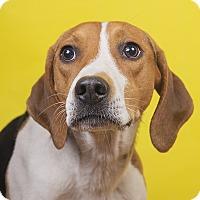 Adopt A Pet :: Chris - Lyndhurst, NJ