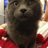 Adopt A Pet :: PRINCE - Lawton, OK