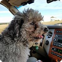 Adopt A Pet :: Bubba - Macomb, IL