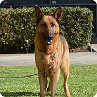 German Shepherd Dog Dog for adoption in Mira Loma, California - Lily
