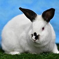 Adopt A Pet :: Redwood - Pflugerville, TX