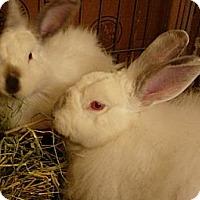 Adopt A Pet :: Charlotte - El Cerrito, CA