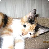 Adopt A Pet :: Vera - Catasauqua, PA
