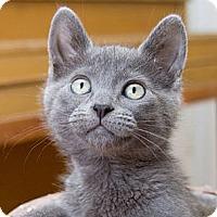 Adopt A Pet :: Lexie - Irvine, CA