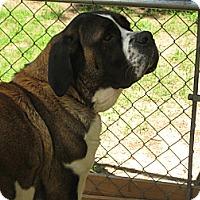 Adopt A Pet :: MISTY #2 - Sudbury, MA