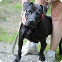 Adopt A Pet :: Cleo - Tinton Falls, NJ