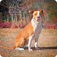 Adopt A Pet :: Sammie - Fort Valley, GA