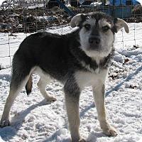 Adopt A Pet :: Zorro - Hartford, CT