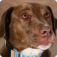 Adopt A Pet :: Cinco - Baltimore, MD