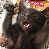 Adopt A Pet :: Ike - Whitestone, NY