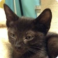 Adopt A Pet :: Tito - Toronto, ON