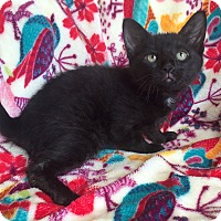 Adopt A Pet :: Barbara - Addison, IL