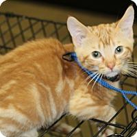 Adopt A Pet :: Rufus - Wichita, KS