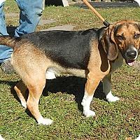 Adopt A Pet :: Deacon - Newport, NC