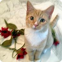 Adopt A Pet :: Kaydee - Alvin, TX