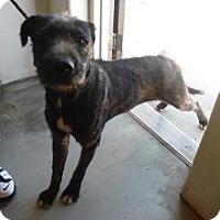 Adopt A Pet :: BRADY - Middletown, CT