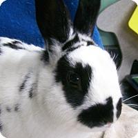 Adopt A Pet :: Truman - Harrisburg, PA