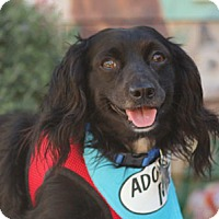 Adopt A Pet :: Blackie - Pacific Grove, CA