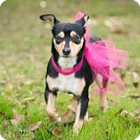 Adopt A Pet :: Gypsy - Seattle, WA