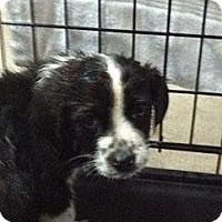 Adopt A Pet :: Freckles - Hazard, KY