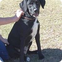 Adopt A Pet :: Rufus - Crawfordville, FL
