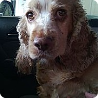 Adopt A Pet :: ABBY - Tacoma, WA