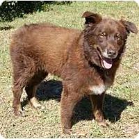 Adopt A Pet :: Paco - Orlando, FL