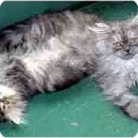 Adopt A Pet :: Edison & Einstein - Arlington, VA