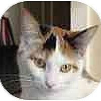 Adopt A Pet :: Smitten - Hamilton, ON