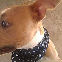 Adopt A Pet :: Cupcake - San Diego, CA
