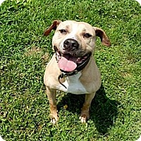 Adopt A Pet :: Vito - Lapeer, MI
