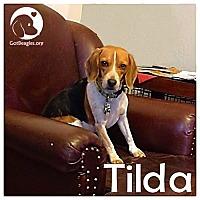 Adopt A Pet :: Tilda - Novi, MI