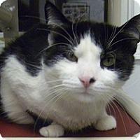 Adopt A Pet :: Elvis - Hamburg, NY