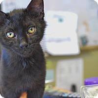 Adopt A Pet :: Englebert - Island Park, NY