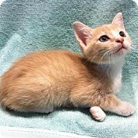 Adopt A Pet :: Brinkley - Watkinsville, GA