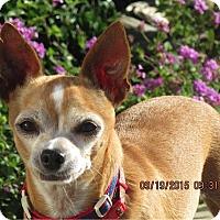 Adopt A Pet :: Eddy - San Diego, CA