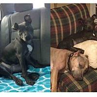 Adopt A Pet :: MAGPIE - Atlanta, GA