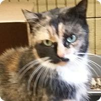 Adopt A Pet :: Calliope - Kensington, CT