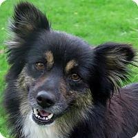Adopt A Pet :: Zoey - Minneapolis, MN