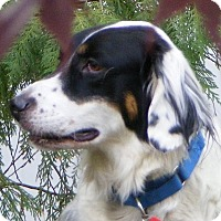 Adopt A Pet :: BOB - Pine Grove, PA