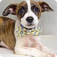 Adopt A Pet :: Manny - Dublin, CA