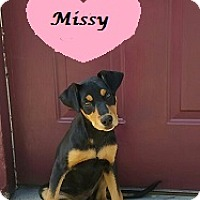 Adopt A Pet :: Missy - Bartonsville, PA