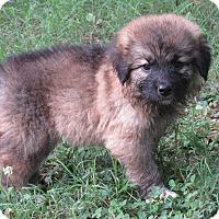 Adopt A Pet :: Manny - Kyle, TX